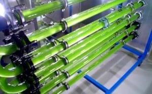Biodiesel-Algas