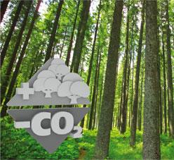 sostenibilidad-y-medio-ambiente (1)