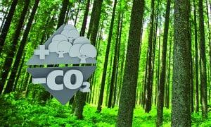 arboles-CO2
