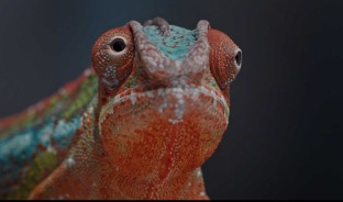 camaleón deskwall gesab