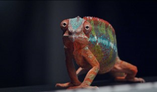 chameleon deskwall gesab